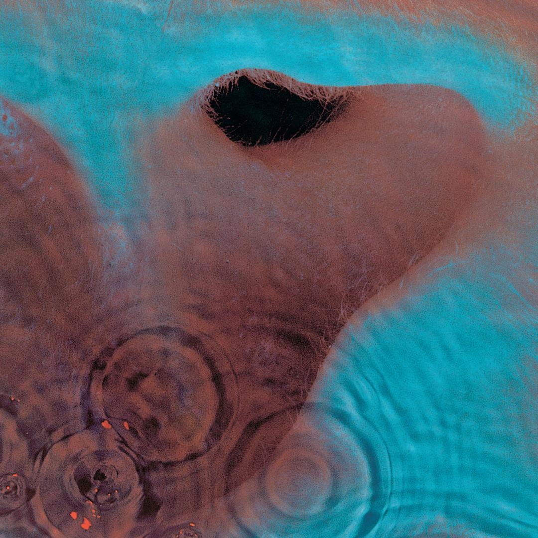 Pink Floyd - Meddle Artwork (1 of 8) | Last.fm |Pink Floyd Meddle