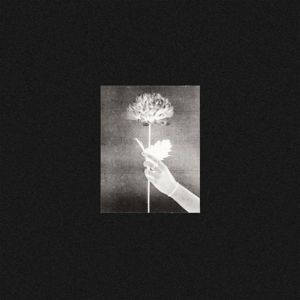 White Flowers - Day By Day | Alternative | Written in Music